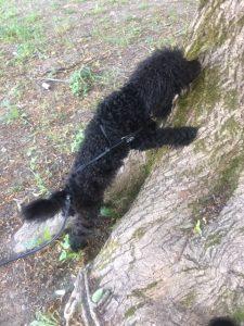 Marty letar efter godis i trädets bark